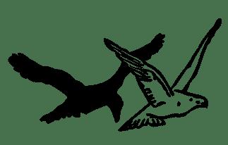 birds-304017_1280